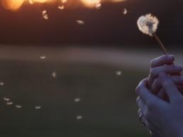 Mindfulness para el optimismo